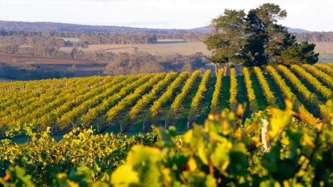 World Travel Western Australian Vineyards