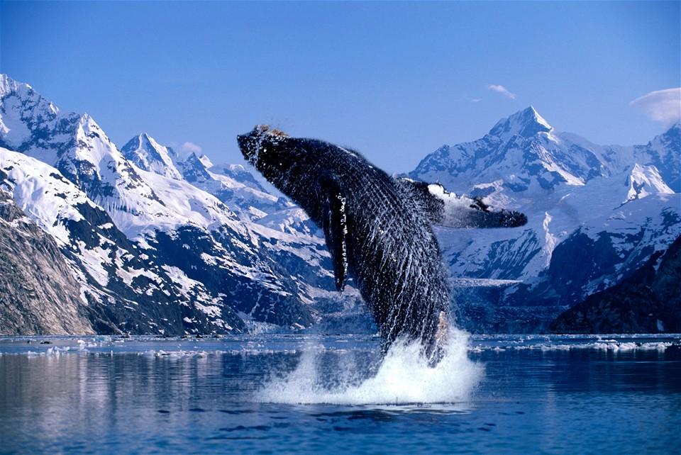 Glacier Bay Alaskan Cruise